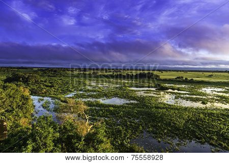 Colorful Sunrise in Pantanal River - Pantanal is the world's largest tropical wetland areas located in Brazil , South America
