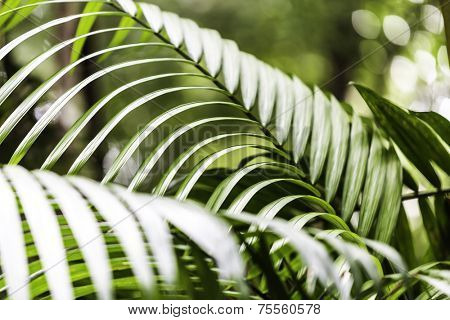 Plants in Amazon Forest, Brazil
