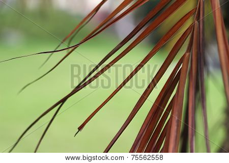 colorful leaves with green background