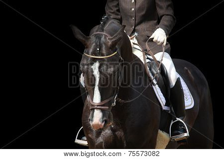 Beautiful Brown Sport Horse Portrait Isolated On Black