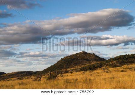 African Bush Under Blue Sky.