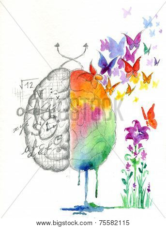 Brain hemispheres watercolor