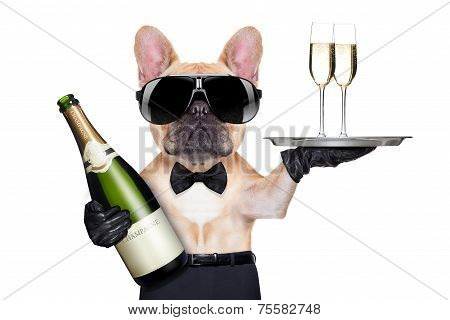 Cool Party Dog