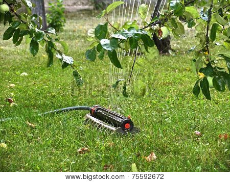 Sprinkler Under Apple Tree