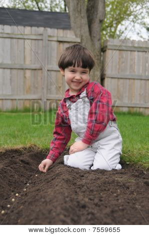 Little Boy Smiles While Planting Bean Seeds