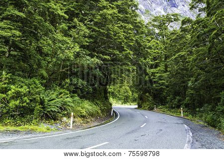 Road to Milford Sound in New Zeland
