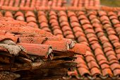 picture of roof tile  - detail of a roof of a house with Arabic tiles