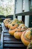 stock photo of darwin  - A row of pumpkins lined up on a bench in front of Charles Darwin