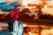 pic of hydroelectric  - Macaw in Pantanal - JPG