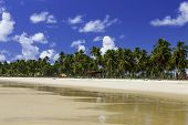 stock photo of northeast  - Palm trees in Porto de Galinhas - JPG