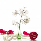 stock photo of moon-flower  - Moon flower in a green vase and a pearl necklace on a white background - JPG