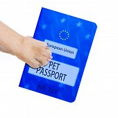 picture of petting  - dog or pet holding its pet passport with paw isolated on white background - JPG