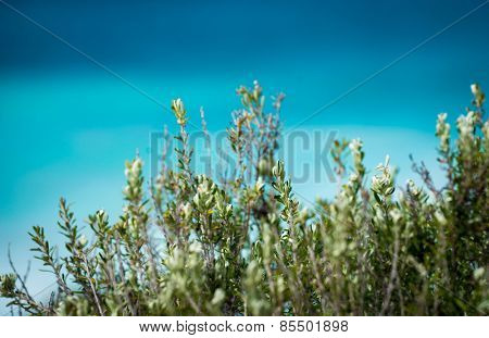 A native plant in front of the ocean