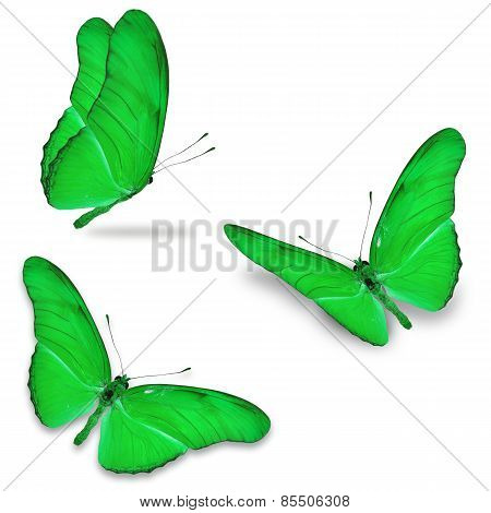 Three Green Butterfly