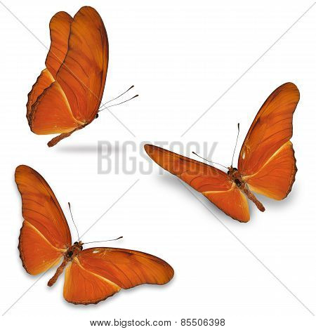 Three Orange Butterfly