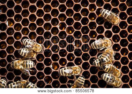 Macro shot of bees swarming on a honeycomb