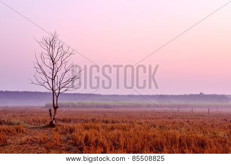 Lonely Dying Tree At Dawn