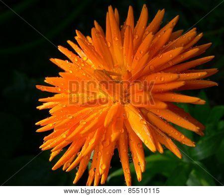 An explosion of Orange