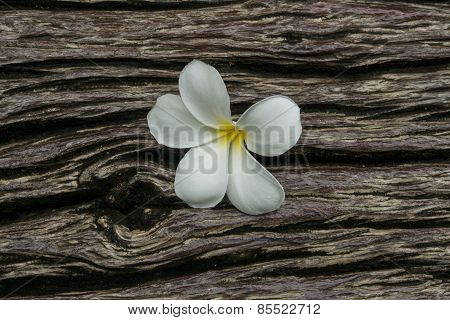 Plumeria On Timber