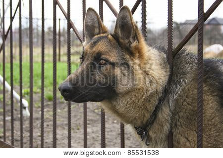 Dog Over The Fence