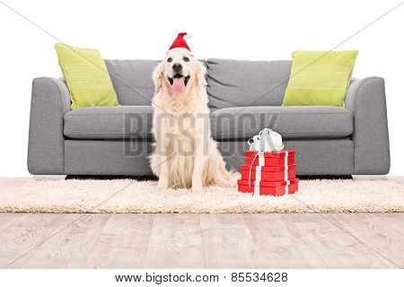Studio shot of a dog with Santa hat sitting by a sofa isolated on white background