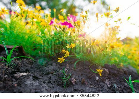Yellow Flower Background With Light From Sun.