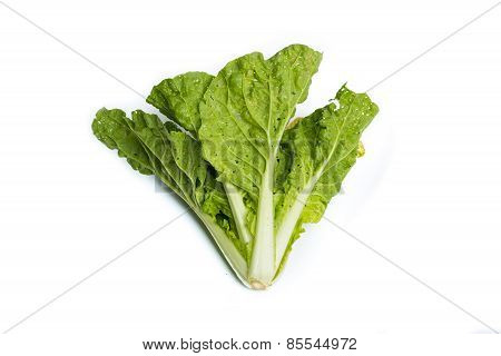 Fresh Organic Lettuce Over White Background