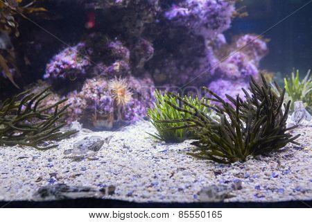 Lit up sea life in tank at the aquarium