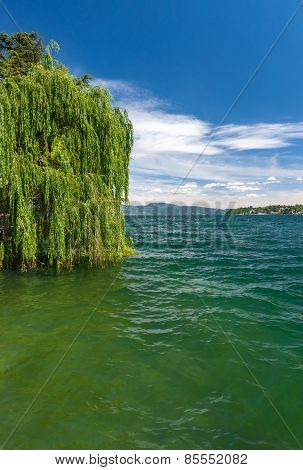 The green tree on a lake Garda with mountains as background