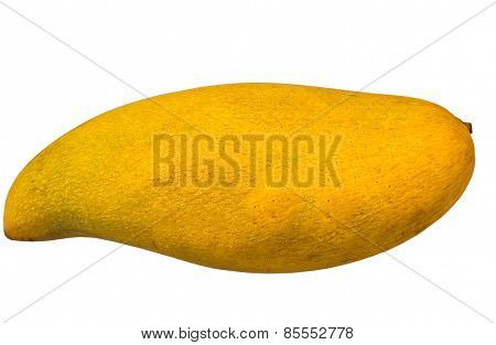 Ripe Mangoes Isolated In White Background With Clipping Path