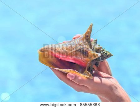 Woman Hand Holding Big Beautiful Rapana Sea Shell
