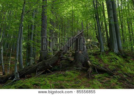 Forest landscape. Broken tree. Beautiful moss