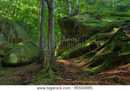 Spring landscape in the forest. Moss on rocks and tree roots. Beauty in nature