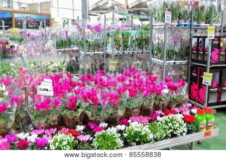 flowers in the OBI store of Moscow Russia.y.