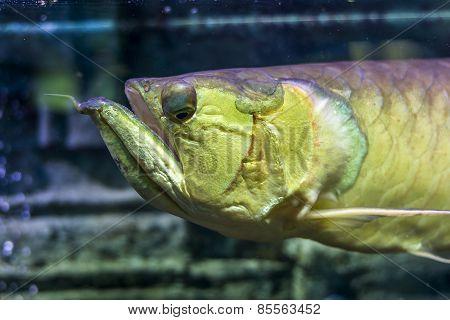 The Underwater World. Arakony Head Closeup Bright Exotic Tropical Coral Fish In The Red Sea Artifici