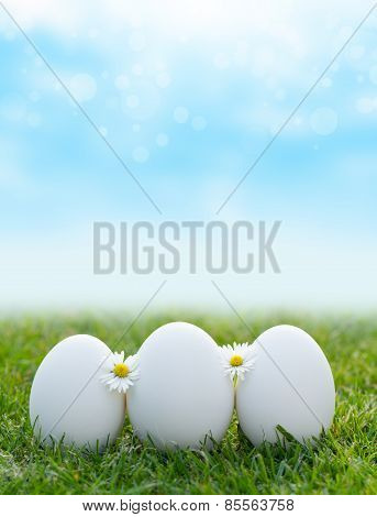 White Eggs Laying In Green Grass With Daisy