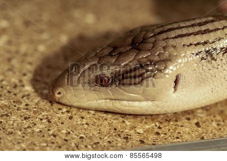 Fantastic Close-up Portrait Of Tropical Snakes. Selective Focus, Shallow Depth Of Field.