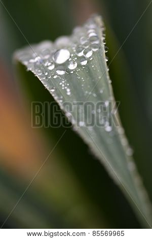 Raindrops On Green Leaf Roll Down