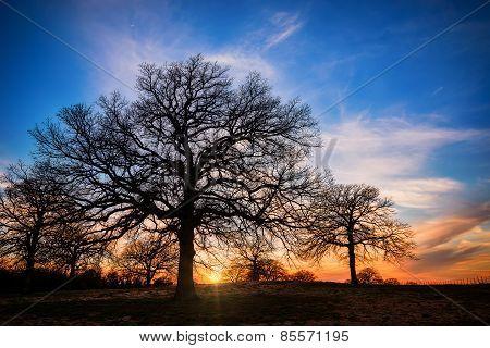 Texas Winter Sunset