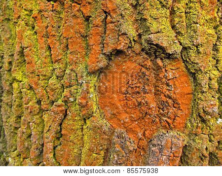 yellow and orange bark