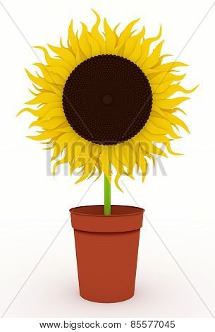 Sunflower In Pots