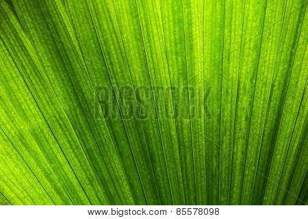 Abstract natural pattern created by palm leaf