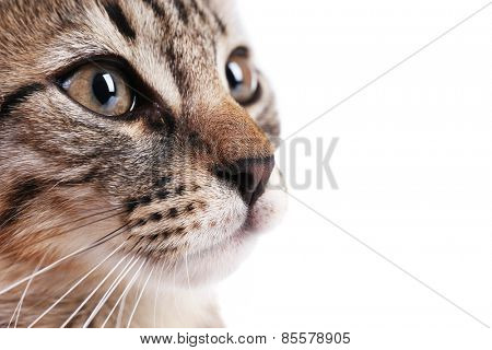 Portrait of cute kitten isolated on white
