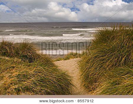 Coastal dunes and beach