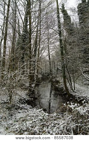 Woodland stream with snow
