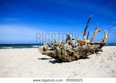 Extremely Large Piece Of Driftwood On The Sandy Beach