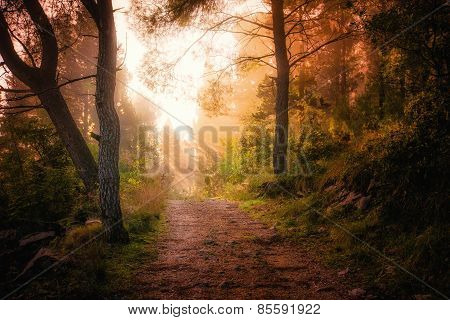 Path Through The Woods And Light Rays As They Break Through Morning Mist