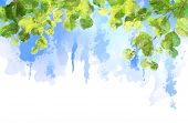 picture of blue  - Green leaves - JPG