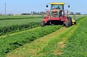 stock photo of hay bale  - Mowing alfalfa for hay on a Central California farm - JPG