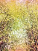 stock photo of bamboo forest  - Bamboo forest with vintage filter effect natural background - JPG